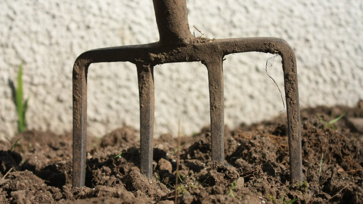 How a Bloom Booster Can Help Poor Soil