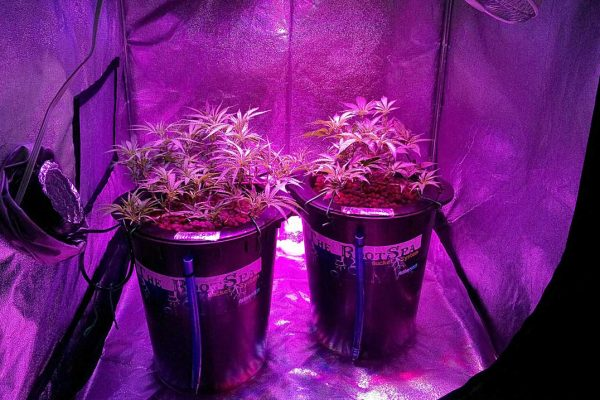 Plant Grow Lights Are Here in LED to Make Your Life Easier