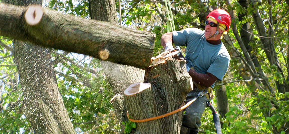 Benefits Of Hiring A Tree Service Company Dave Collyer