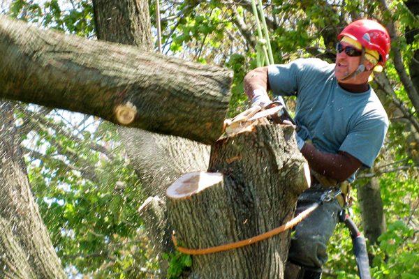 Benefits of Hiring a Tree Service Company