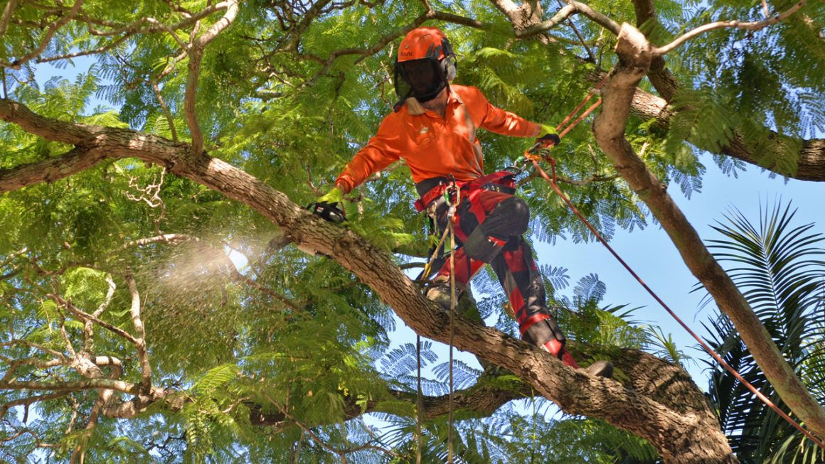 Tree Lopping Mistakes You Should Avoid
