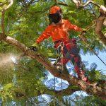 tree service near my location