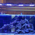 recommended-aquarium-lights