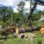 best tree removal service near me