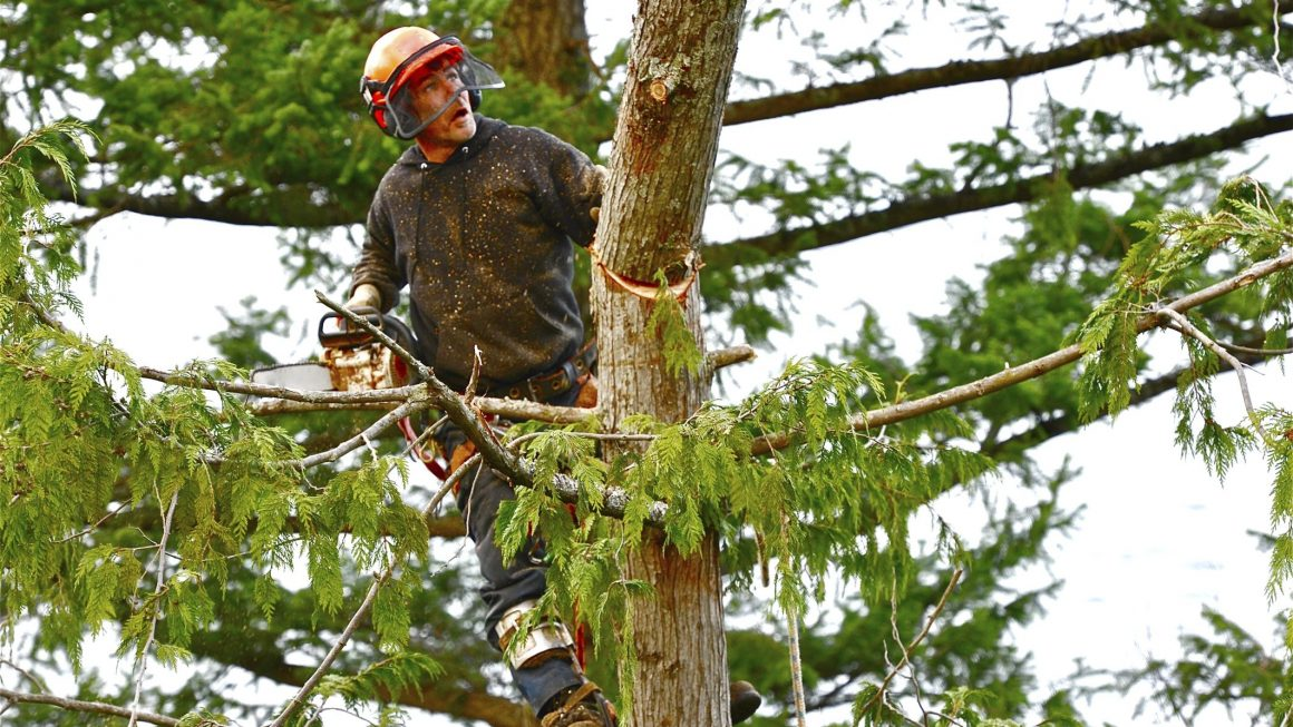 davey tree service locations