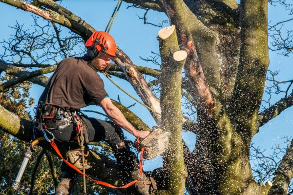 Benefits of Tree Servicing