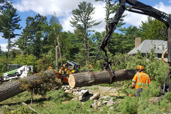 The Financial Benefits of Tree Removal