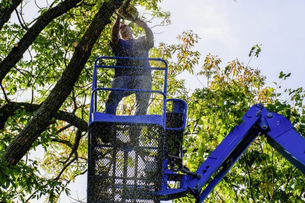 What Falls Under Tree Services