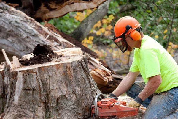 Teaching Your Kids Tree Care