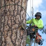 tree care tips