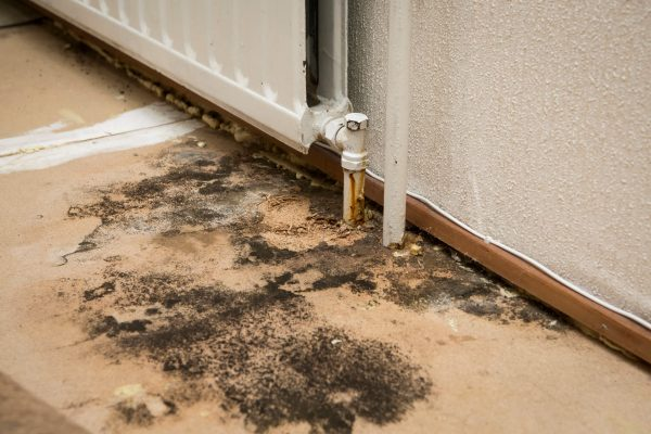 Why You Should Hire Professionals For Mold Removal